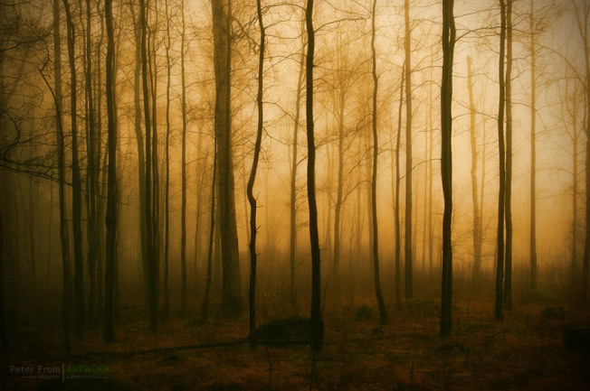 forest-light-97-peter-from