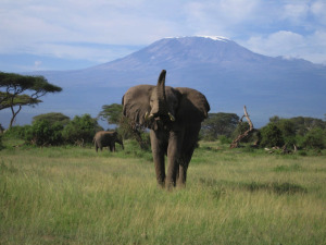 Africa-Kilimanjaro_National_Park-List_of_World_Heritage_Sites_in_Africa-List_of_volcanoes_in_Tanzania-Mount_Kilimanjaro-World_Heritage_Site